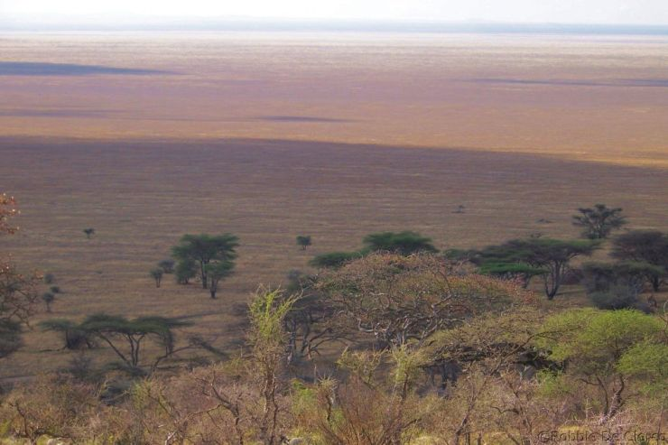 Serengeti National Park (253)