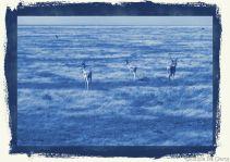 Serengeti National Park (259)
