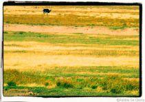 Serengeti National Park (260)