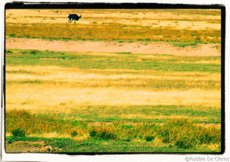 Serengeti National Park (260)
