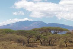 Serengeti National Park (262)