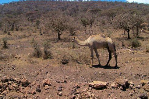 Serengeti National Park (265)
