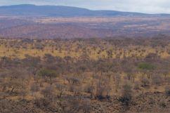 Serengeti National Park (266)
