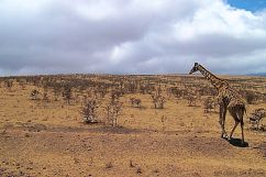 Serengeti National Park (267)