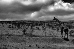 Serengeti National Park (268)