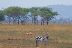 Serengeti National Park (27)
