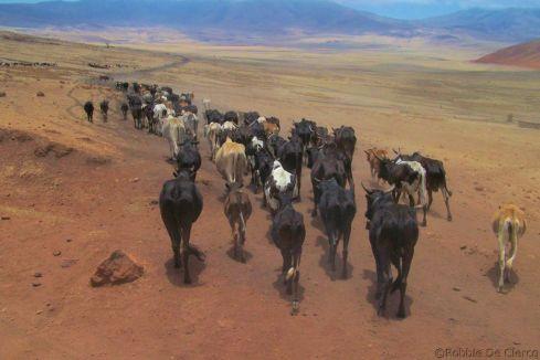 Serengeti National Park (270)