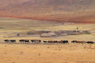 Serengeti National Park (272)