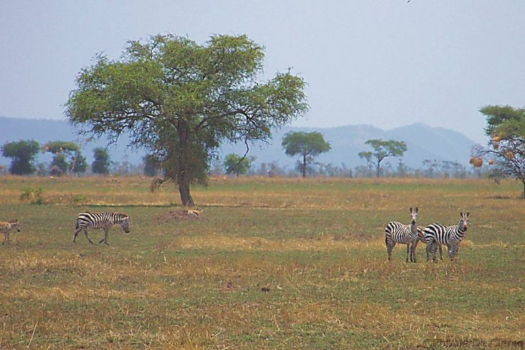 Serengeti National Park (28)