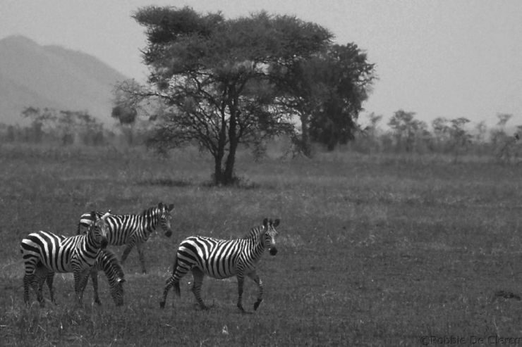 Serengeti National Park (29)