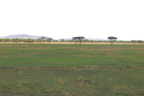 Serengeti National Park (32)