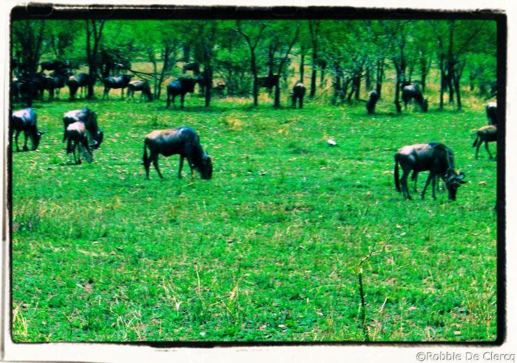Serengeti National Park (37)
