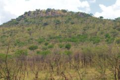 Serengeti National Park (38)