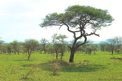 Serengeti National Park (39)