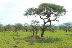 Serengeti National Park (39)