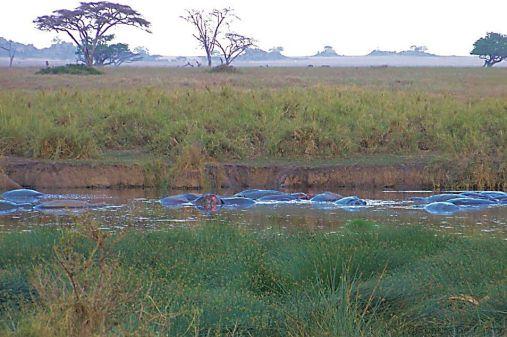 Serengeti National Park (43)