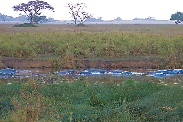 Serengeti National Park (43)