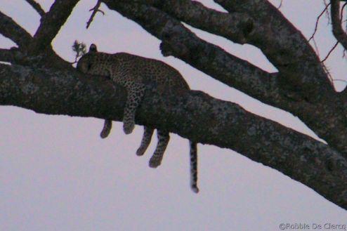 Serengeti National Park (45)