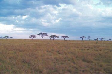 Serengeti National Park (56)