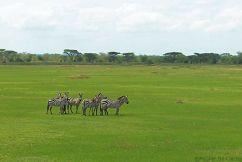 Serengeti National Park (6)