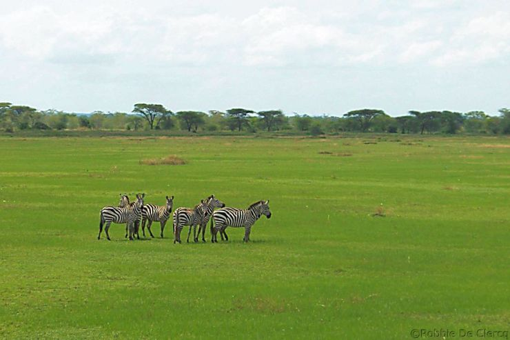 Serengeti National Park (6)