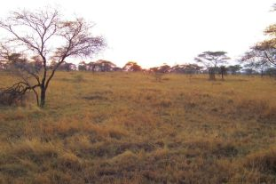 Serengeti National Park (60)