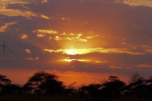 Serengeti National Park (61)