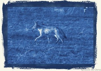 Serengeti National Park (65)