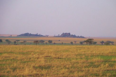 Serengeti National Park (66)