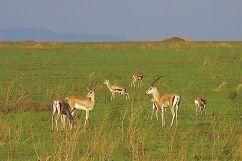 Serengeti National Park (67)