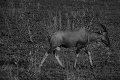Serengeti National Park (69)