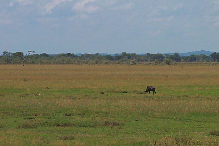 Serengeti National Park (7)