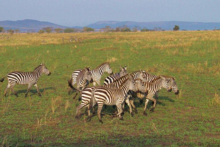 Serengeti National Park (70)