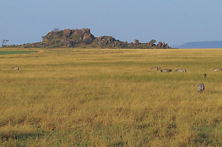 Serengeti National Park (71)