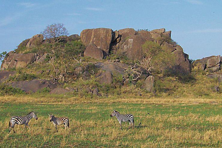 Serengeti National Park (72)