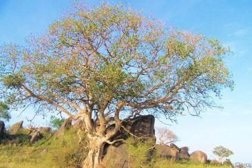Serengeti National Park (75)