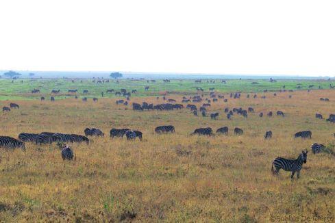 Serengeti National Park (77)