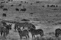 Serengeti National Park (80)