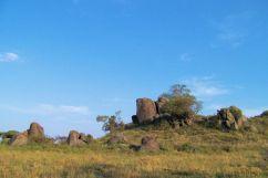 Serengeti National Park (81)