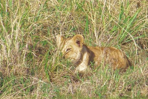 Serengeti National Park (82)