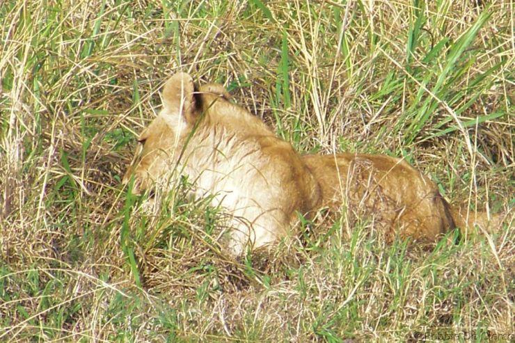 Serengeti National Park (83)