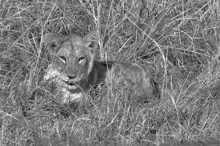 Serengeti National Park (84)