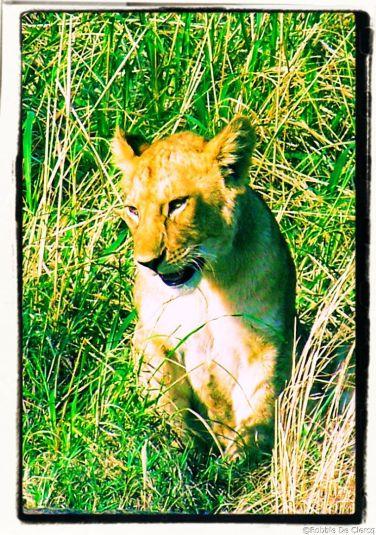 Serengeti National Park (85)