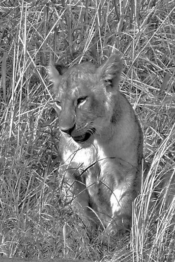 Serengeti National Park (86)