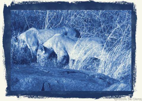 Serengeti National Park (87)