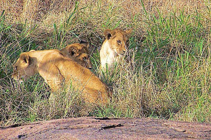 Serengeti National Park (88)