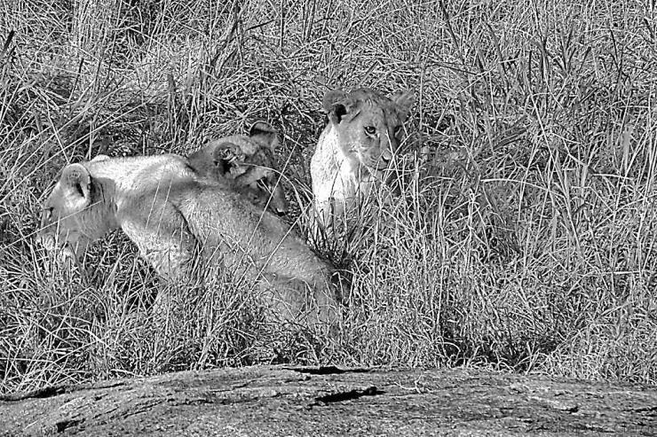 Serengeti National Park (89)