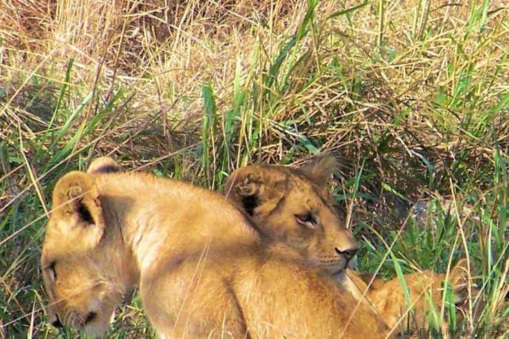 Serengeti National Park (90)