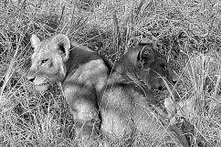 Serengeti National Park (91)