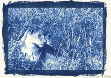 Serengeti National Park (93)